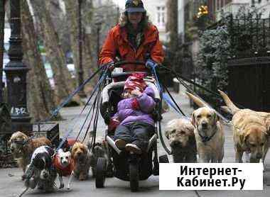 Выгул собак Колпино
