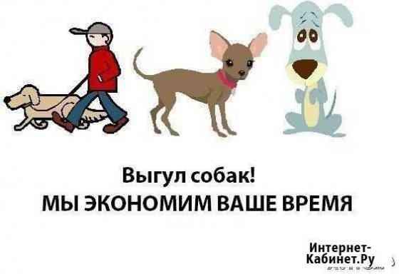 Выгул собак Ставрополь