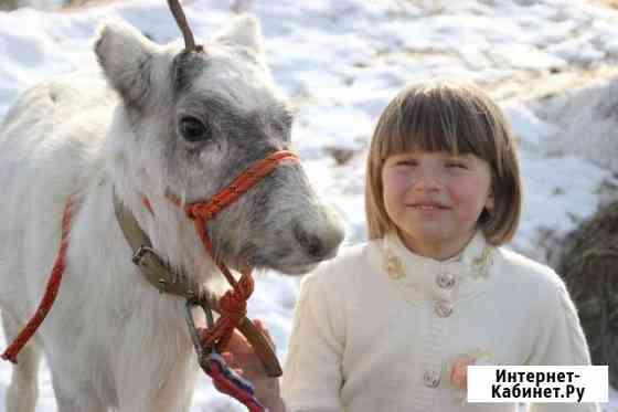 Детские праздники,выезды к вам,Фотосессия с оленям Ногинск