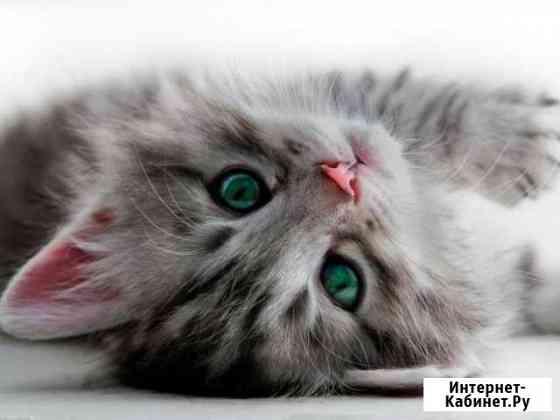 Гостиница для кошек и мелких животных Самара