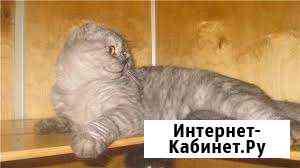 Гостиница для животных Кошкин дом Краснодар