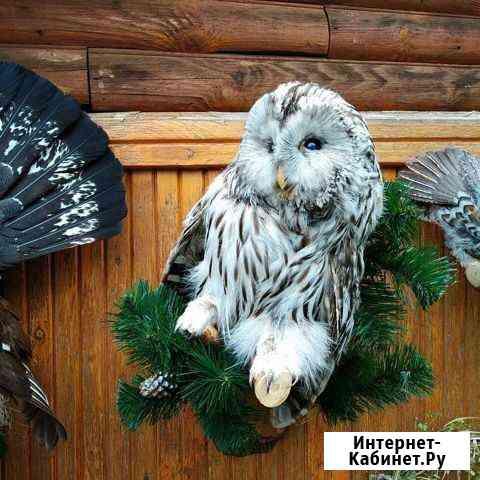 Чучела зверей и птиц Пермь