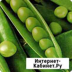 Семена ярового гороха Аксайский усатый 7, Усатый кормовой ЭС Зерноград