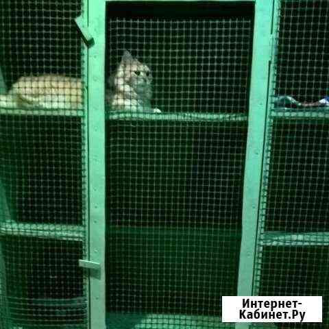 Гостиница для кошек Тюмень