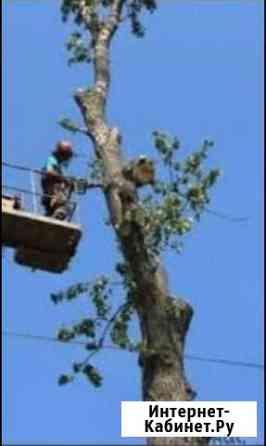 Срубаем деревья Нестеровская