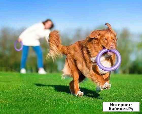 Выгул крупных и средних собак Курск