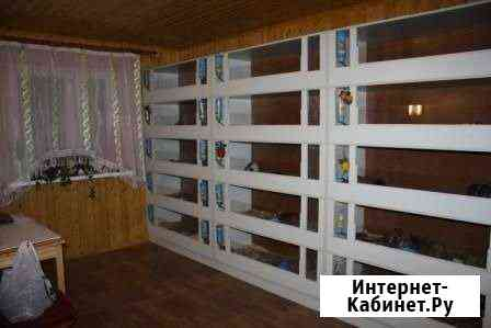 Гостиница для морских свинок Москва
