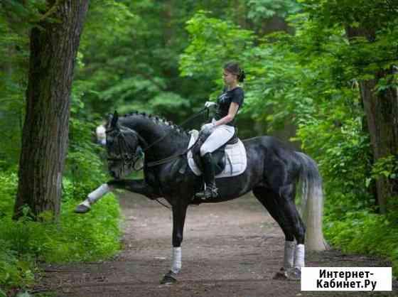 Аренда лошади Железнодорожный