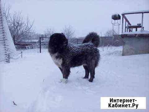 Гостиница для собак, зоотакси, зоогостиница Белгород