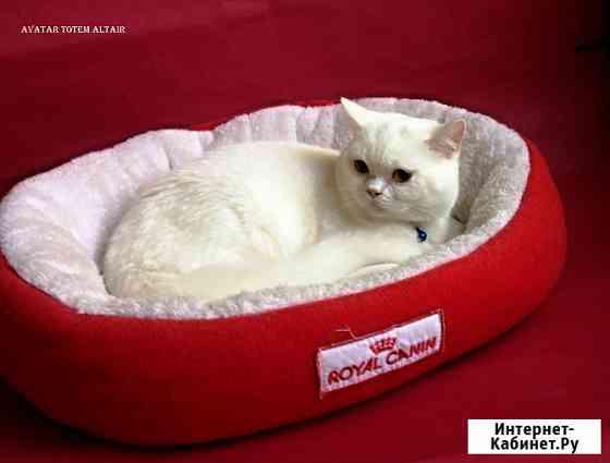 Котик для вязок Симферополь
