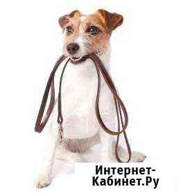 Выгул собаки + дрессировка (доп) Москва