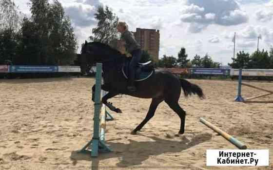 Занятия конным спортом Лыткарино