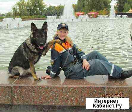 Передержка и дрессировка собак Большое Буньково