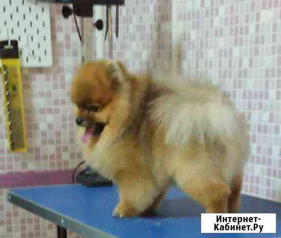 Стрижка (груминг) собак и кошек-выезд на дом Ростов-на-Дону