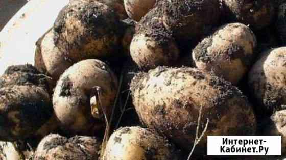 Картофель домашний с доставкой Чита