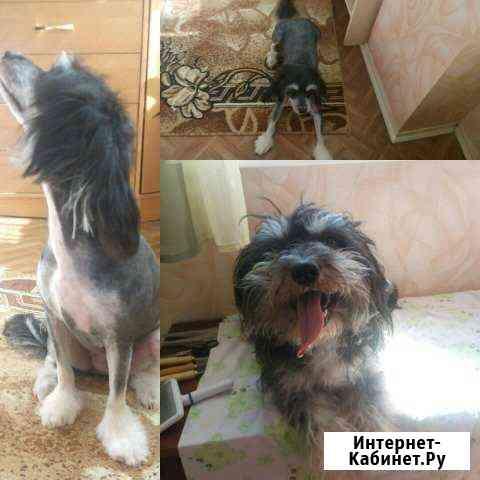 Стрижка собак и кошек,Севастополь Севастополь