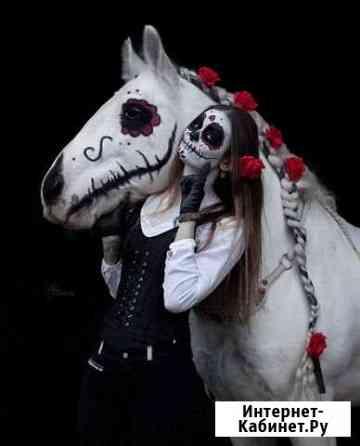 Лошади для съемок и фотосессий Москва