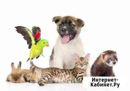 Гостиница для животных Череповец