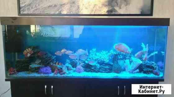 Обслуживание аквариумов дома и в офисах Тула