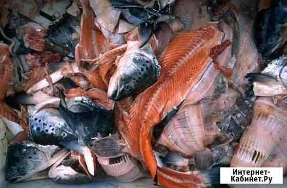 Покупаем рыбные отходы 40 тонн в сутки Казань