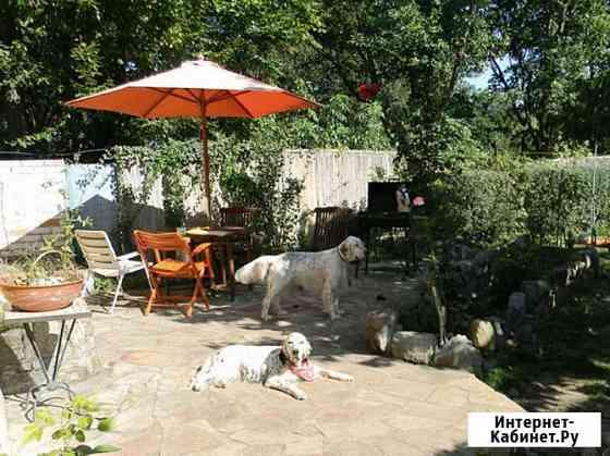 Гостиница для собак с домашней обстановкой Москва