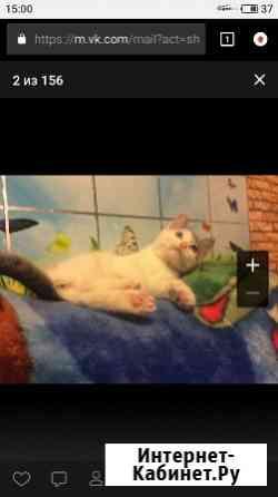 Котёнок для добрых людей Екатеринбург