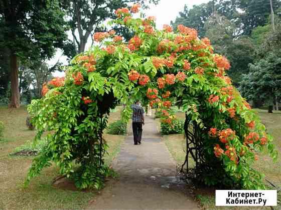 Арка, способная выдержать вес разросшихся растений Москва