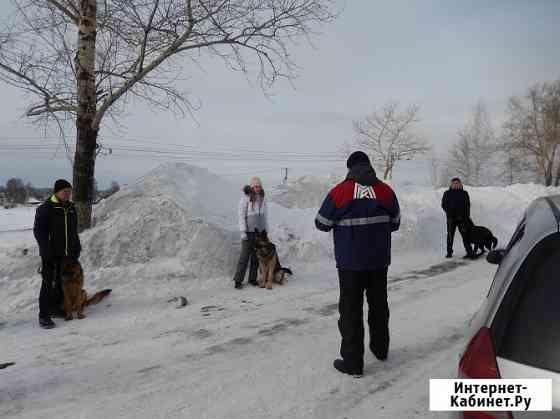 Обучение собак на прикладную защиту Новокузнецк