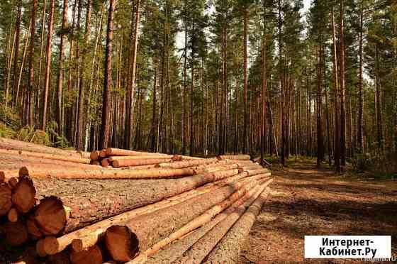 Куплю лес на корню хвойных пород Красноярск