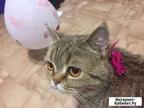 Кошка Тольятти