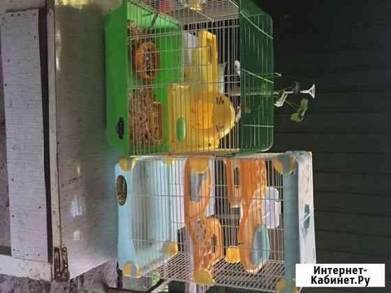 Клетки для хомяков, крыс Моршанск