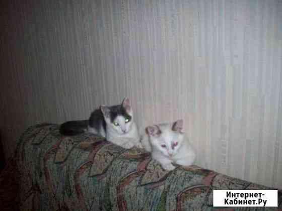 2 котика (3.5 месяца и 3 месяца) Йошкар-Ола
