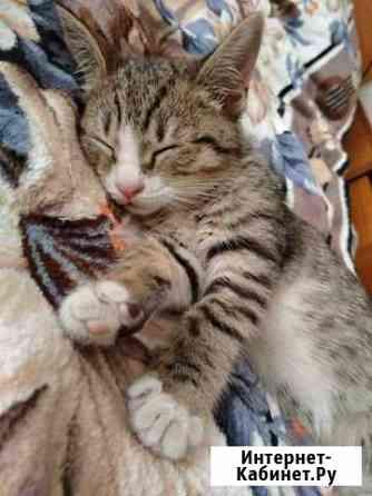 Котенок Тверь