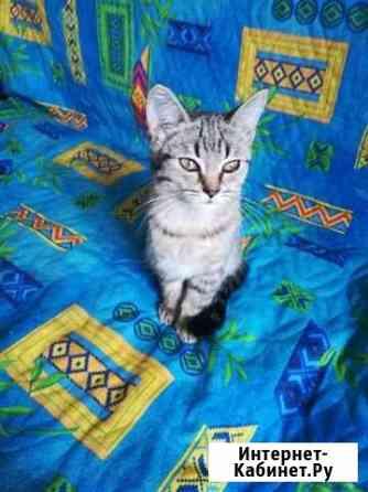 Кошка Рязань