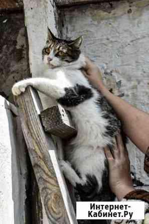 Кошечка ищет дом Йошкар-Ола