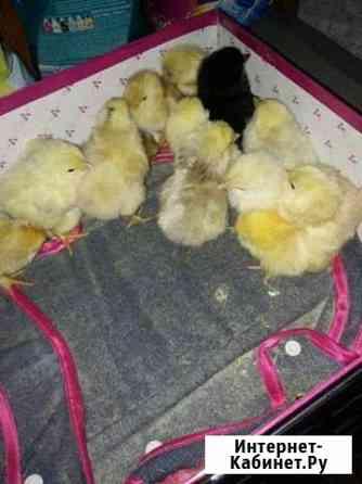 Гуси цыплята наседка Саранск