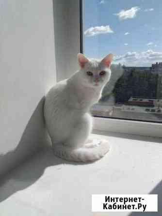 Кот Ижевск