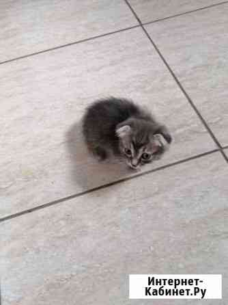 Кошка Курган