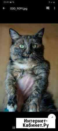 Кошка Саранск