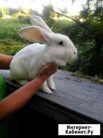 Продаю кроликов Нарышкино