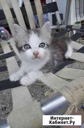 Котята в добрые руки Прохладный