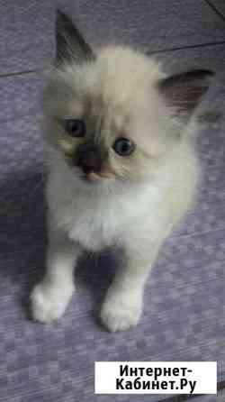 Очаровательные котята Тула