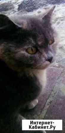 Кошки Белгород