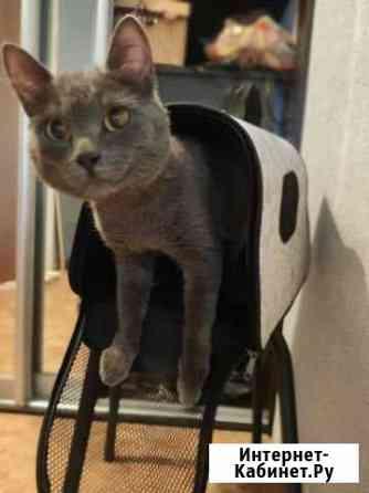 Найден котик, отдам Томск