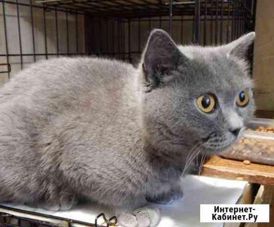 Кошка Прада ищет заботливые руки Киров