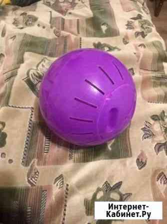 Прогулочный шар для грызунов Липецк