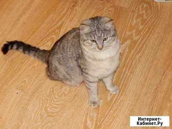 Шикарная кошка и симпотяга кот Курск