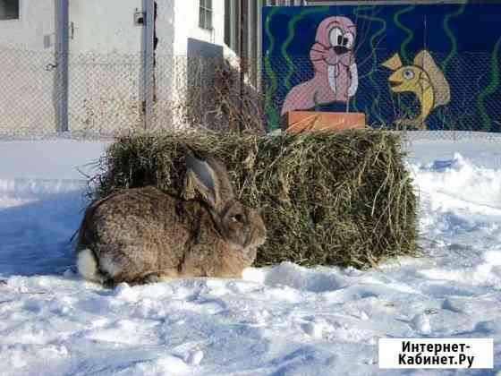Продаются кролики разных пород Оренбург