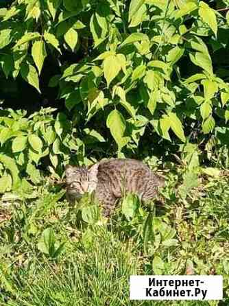 Котик ищет домик Чебоксары
