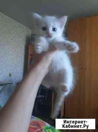 Котенок беспородный в добрфе руки Тула